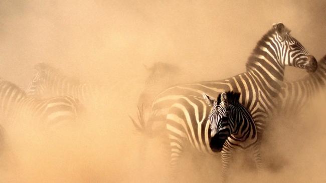 Алгоритмы DeepMind помогут охранять природу национального парка в Танзании