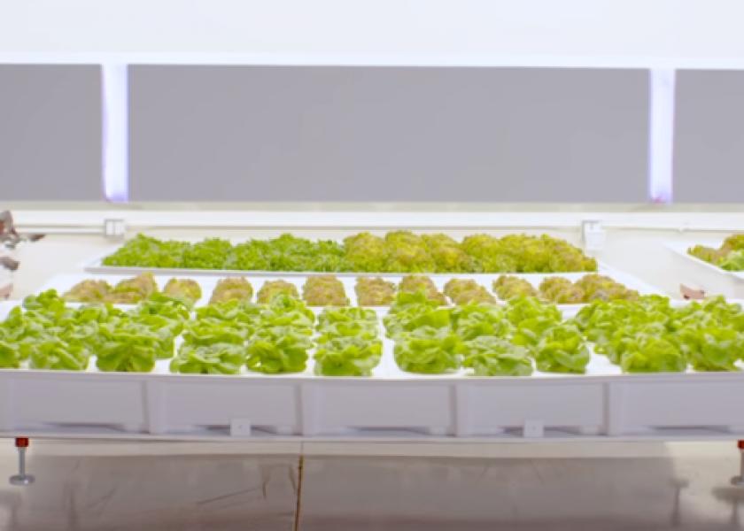 Роботизация: Iron Ox - автономная гидропонная ферма будущего?