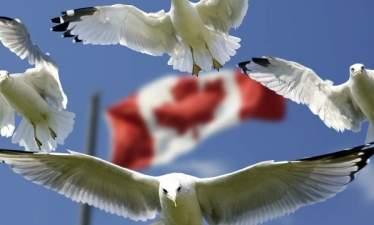 Беспилотники: Лидер беспилотных доставок - канадская DDC?