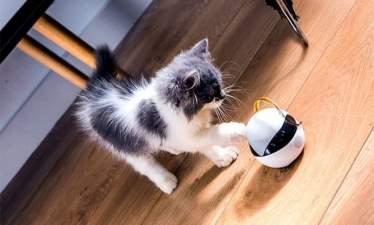 Умный робот Ebo поиграет с котом, пока хозяина нет дома