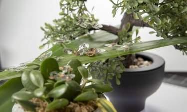 Маленький насекомоподобный робот выдерживает удары мухобойки
