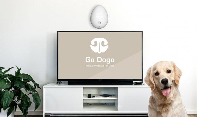 Уходя на работу, поручите свою собаку виртуальному тренеру Go Dogo