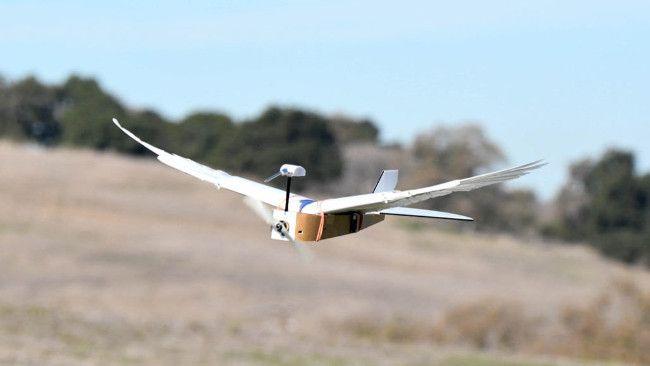 Ученые усовершенствовали дрон с помощью голубиных перьев